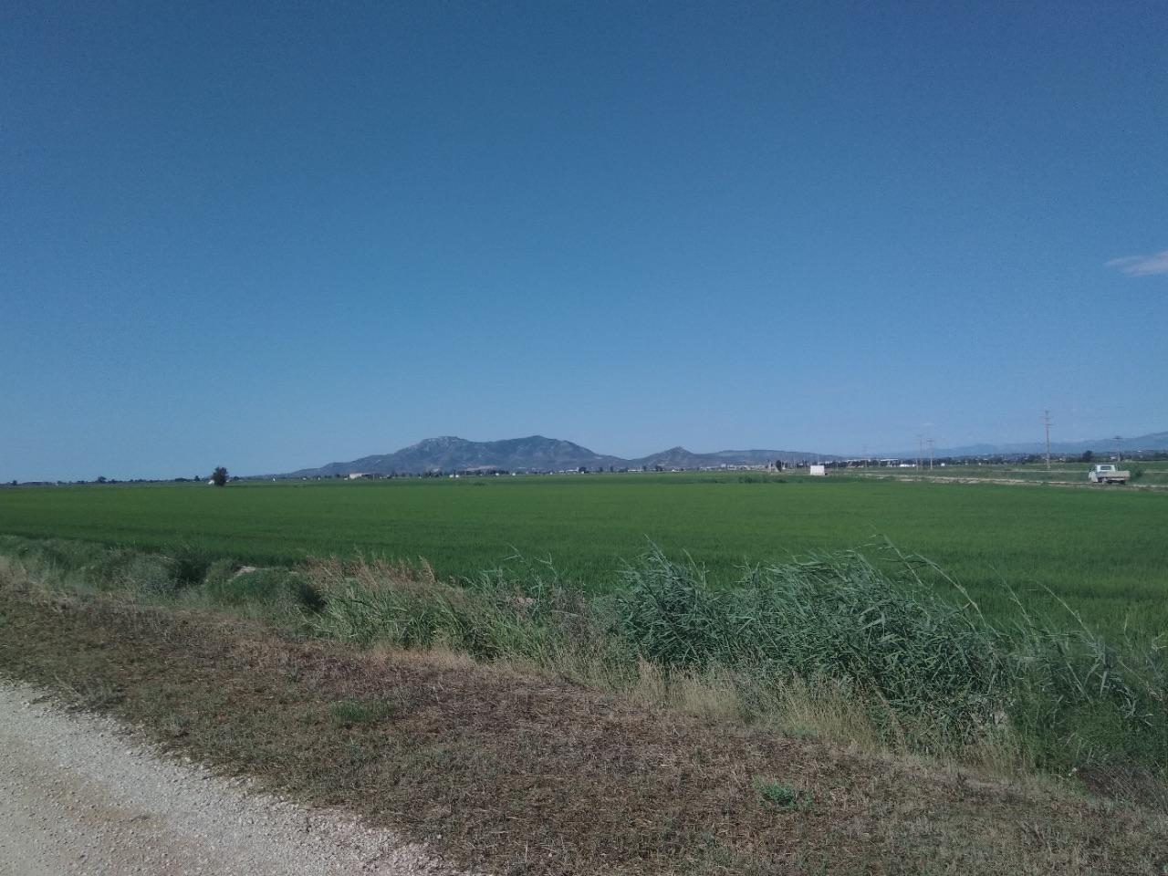 Delta ddel Ebro