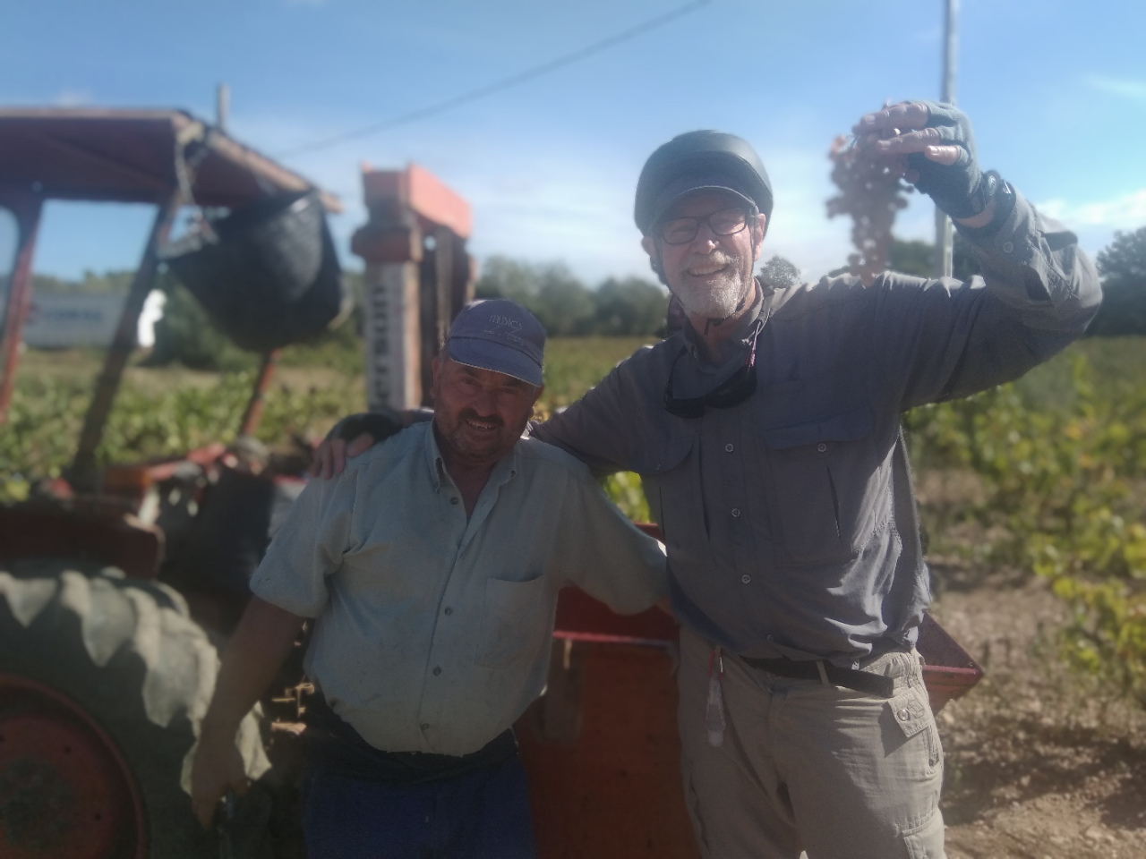 wine Vilafranca del Penedes